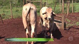 Agro Record na íntegra - 07/04/2019 Bloco 2