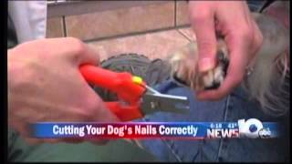 Pet Connection Extra - Trimming Dogs Nails