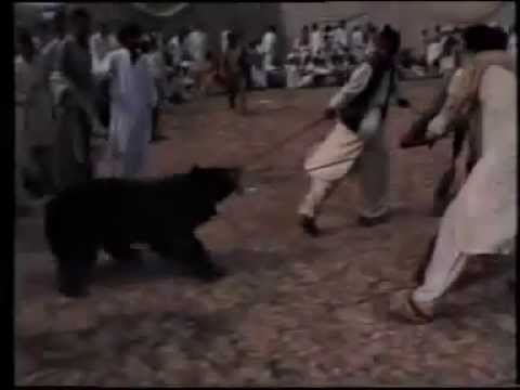 dog fights pakistan
