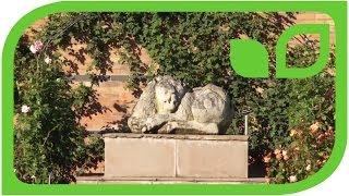 #965 Ein Spaziergang im Lion Garden von Davis Austin