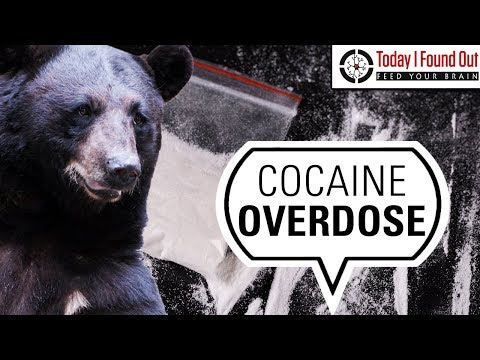 The Curious Case Of Pablo EskoBear: The Cocaine Bear