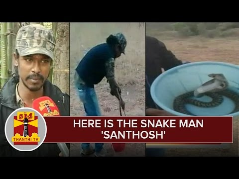 Here-is-the-Snake-Man-Santhosh-Kumar-Catching-Dangerous-Snakes-over-15-Years--Thanthi-TV