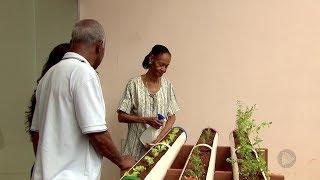Prefeitura inaugura horta adaptada para idosos em Bauru