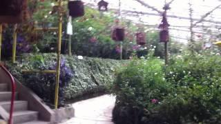 rose garden @Cameron Highland