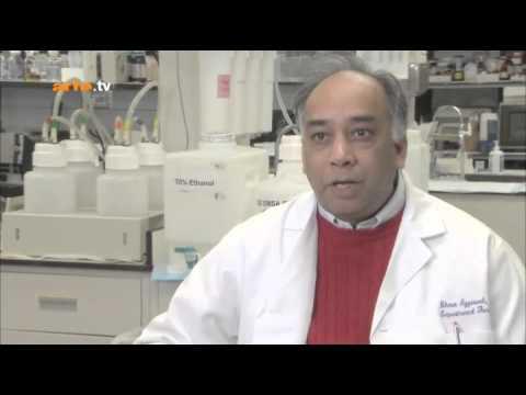 Kurkumin – Gewürz gegen Krebs