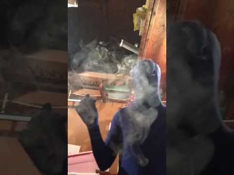 Morph suit smoking cigar swisher sweet blk garage