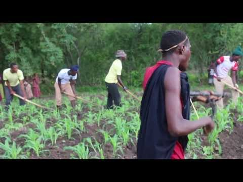 Tanzania Sukuma, Bachonga Magembe working in the fields