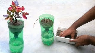 Video Self watering system for plants using waste plastic bottle MP3, 3GP, MP4, WEBM, AVI, FLV Maret 2019