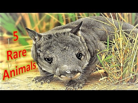 Rarest Animal Top Rare Animals In The World Five Rarest Animals On Earth In The History Site Title Site Title Top Rare Animals In The World Five Rarest Animals On Earth In
