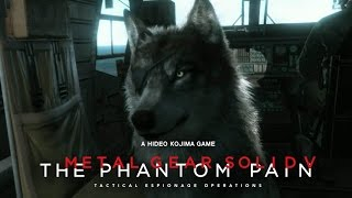 Trailer rivelazione cane DD