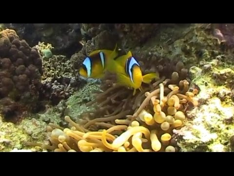 Под водой с Вадимом Малышем - 496 - Красное море. Дахаб. (видео)