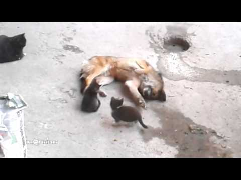Mama Cat Brings Her Kittens To Meet An Old Friend And Its The Cutest Thing Ever!