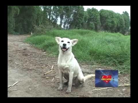 05 Azucenita de Jarahuran   Paisanito (видео)
