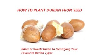 Video How to grow Durian from seed - Guide to identifying Your Favourite Durian Types MP3, 3GP, MP4, WEBM, AVI, FLV Oktober 2018