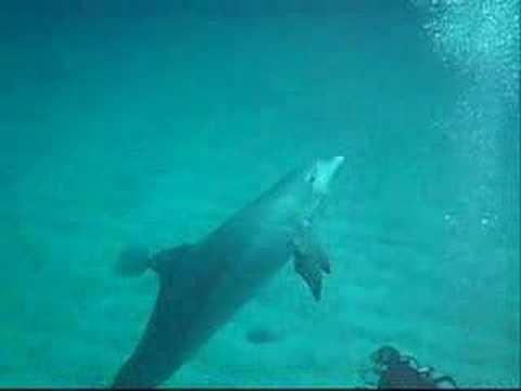 Inmersion con delfines