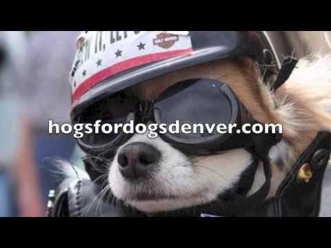Hogs For Dogs Denver 2013