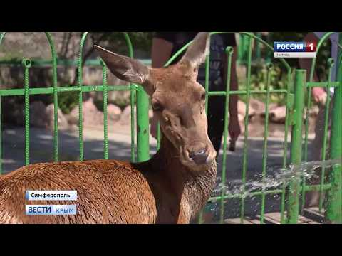 Крымская жара: как в зооуголке Симферополя спасают питомцев от зноя