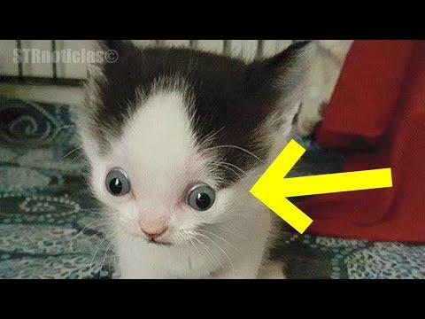 Nadie quiere a este adorable gatito y la razón seguramente romperá tu corazón...