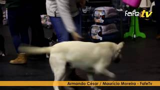 10ª Exposição canina nacional