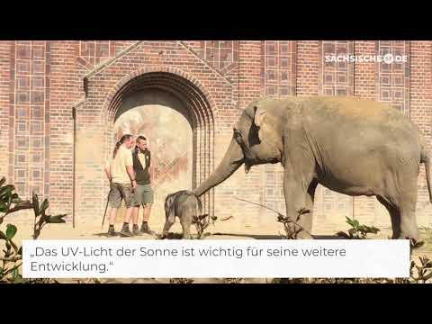 Das Elefantenbaby zeigt sich den Besuchern im Zoo Leip ...