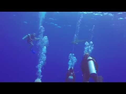 Oceanic Shark with Video Operator