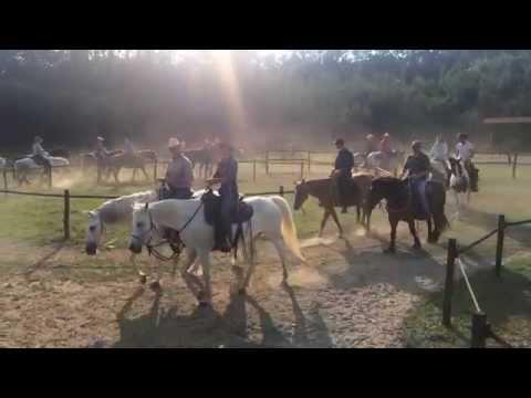 I profili di calma di 20 cavalli condotti senza imboccatura