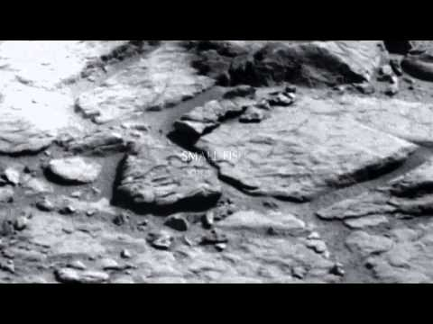 Latest mars anomalies: Fish On Mars: Life on Mars