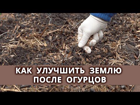 Какие сидераты важно и нужно посадить после огурцов?