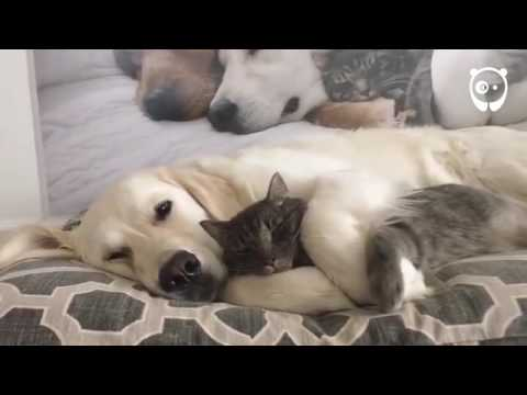 3 Dogs and a Cat are Best Friends