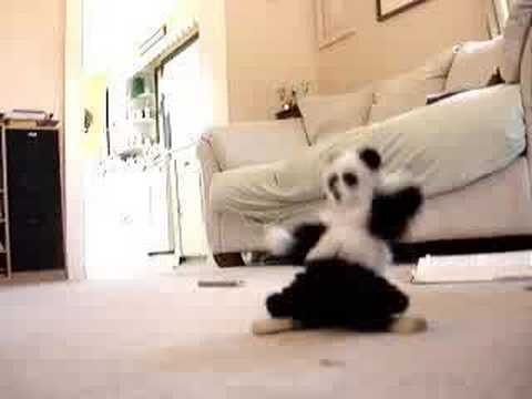 Panda Dance