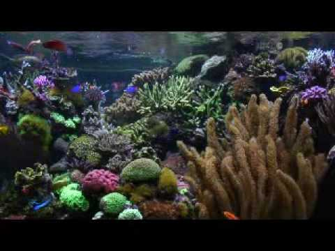 Aquariums - David Saxby's Reef Aquarium (extended version)