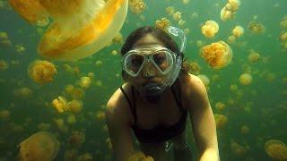 Ginger Zee Travels to Palau's Jellyfish Lake