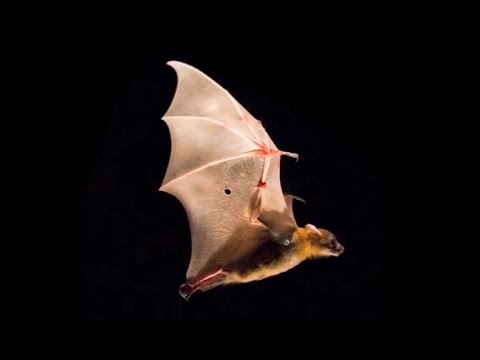 Science Nation - Batty for Bats