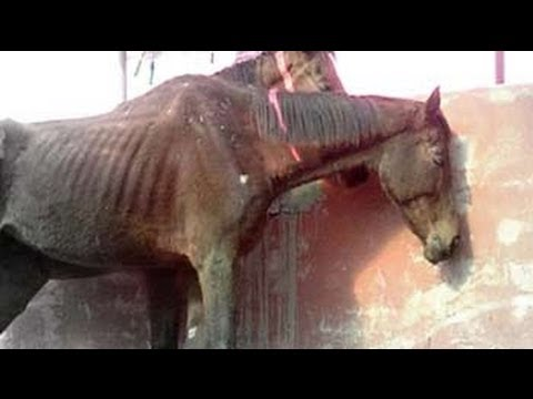DIE - They were meant to speed through race tracks. Instead, they were left to die. Almost 50 thoroughbred racing horses were rescued from a stud farm in Aligarh, ...