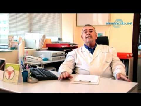 La pseudociesis o falso embarazo