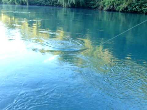 Pesca chinook petrohue