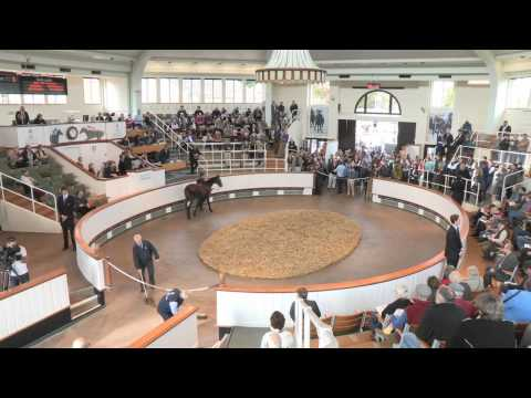 Tattersalls October Yearling Sale Book 1: Day 1 Review