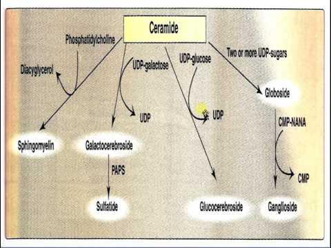 GLYCOLIPID & LIPID STORAGE DISEASE