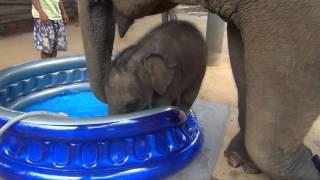 Video Baby Elephant Bath Time Part2 MP3, 3GP, MP4, WEBM, AVI, FLV Mei 2017