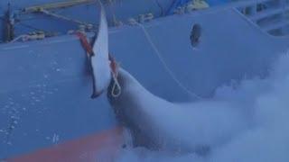 Dramatic whaling footage: Sea Shepherd ships plan to halt Japanese fleet