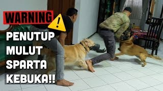 Video SNOWEE KETEMU SPARTA PART. 3 (SUSAH BANGET.. HUHU) MP3, 3GP, MP4, WEBM, AVI, FLV Juli 2019