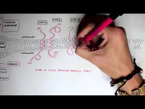 Membrane Proteins I