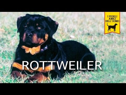 il rottweiler trailer documentario