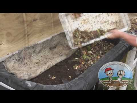 Composting with Tiger Worms