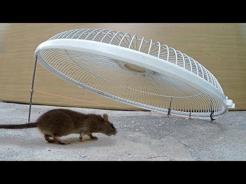 Electric fan guard Mouse/Rat Trap - Thời lượng: 4 phút, 9 giây.