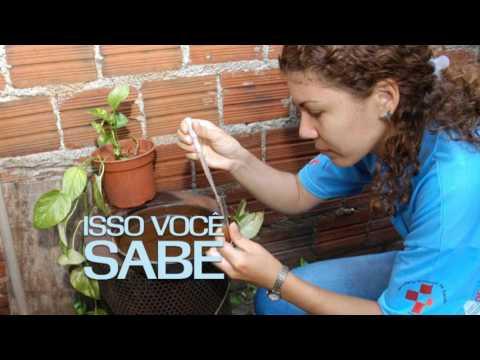 Vídeo: São Gonçalo Unido Contra o Aedes Aegypit 3
