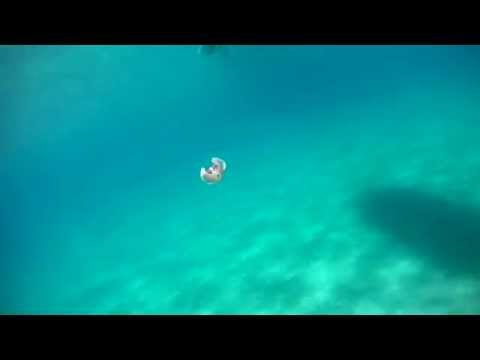 strana incredibile creatura ripresa con la gopro in mare