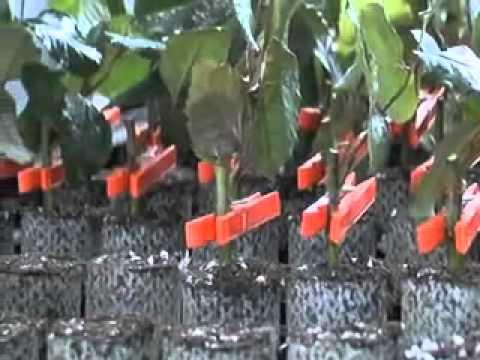 Новые технологии выращивания