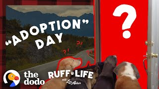 Guy With 9 Dogs Is So Tempted To Adopt 2 More | Ruff Life With Lee Asher by The Dodo