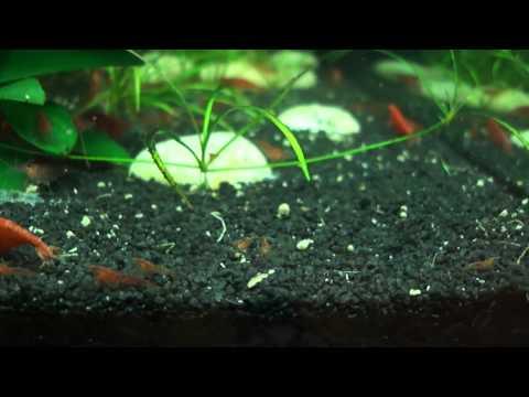 My shrimp farm